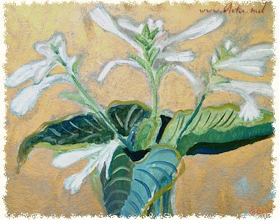 August lillies, 1995 - Elena Bontea
