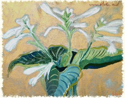 August lillies - Elena Bontea