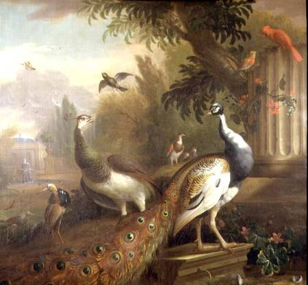 Peacock and Peahen with a Red Cardinal in a Classical Landscape - Tobias Stranover