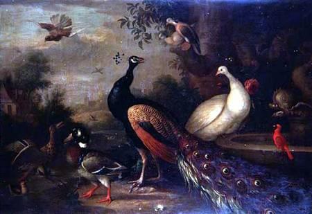 Exotic Birds - Tobias Stranover