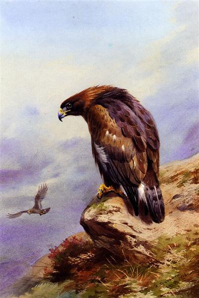 A Golden Eagle, 1916 - Archibald Thorburn