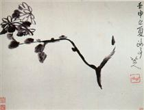 Chrysantheme - Bada Shanren