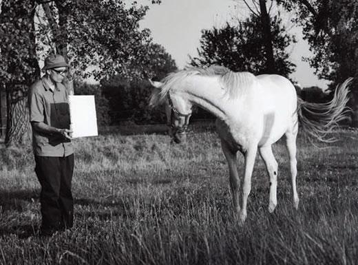 Untitled (Horse), Invisible Painting/Energy - Bruno Jakob