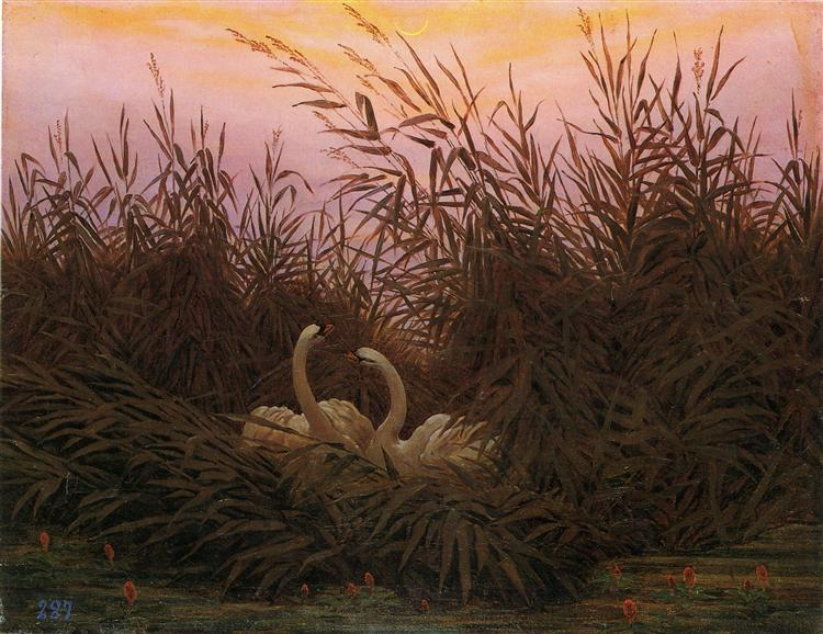 Swans among the reeds at the first Morgenro, 1832 - Caspar David Friedrich