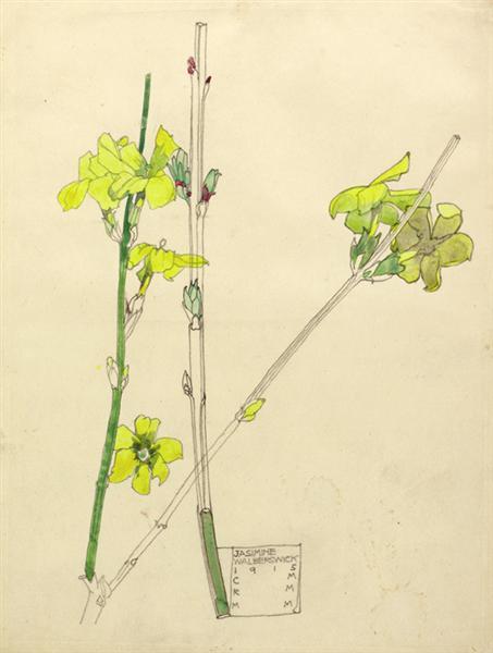 Jasmine, 1915 - Charles Rennie Mackintosh