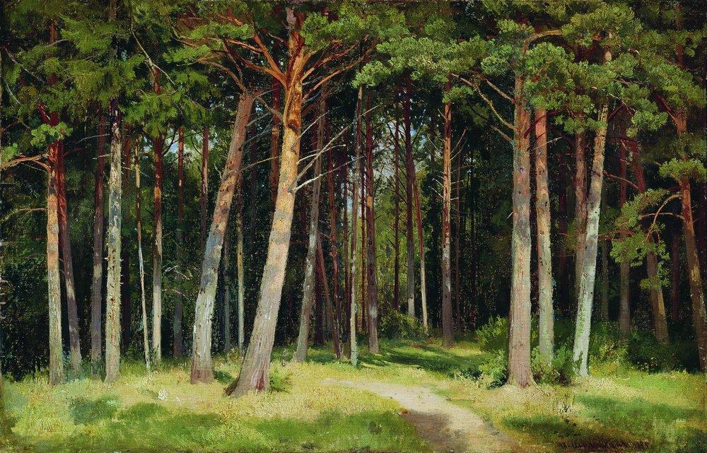 Фото леса панорама