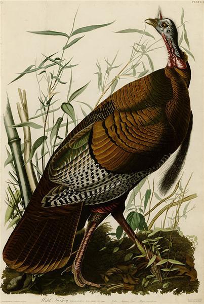 Plate 1. Wild Turkey - Джон Джеймс Одюбон