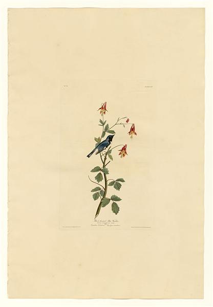 Plate 155 Black-throated Blue Warbler - Джон Джеймс Одюбон