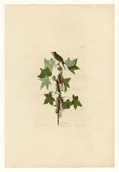 Plate 45. Traill's Flycatcher - John James Audubon