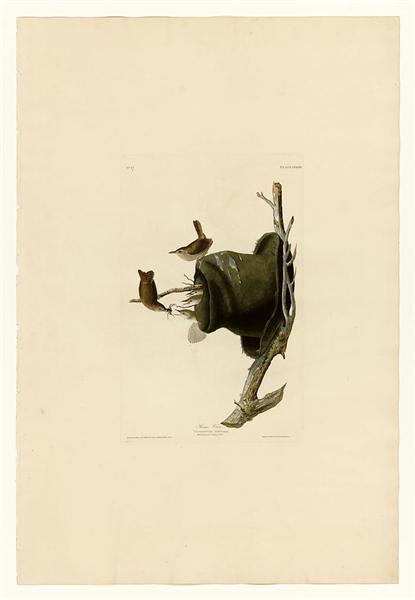 Plate 83 House Wren - John James Audubon