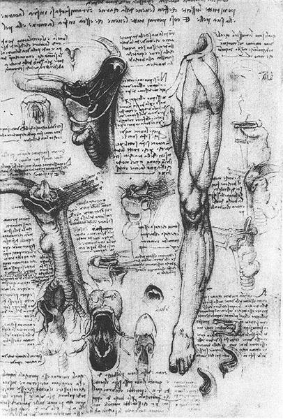 Anatomical studies (larynx and leg), 1510 - Leonardo da Vinci