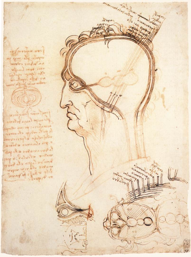 Comparison of scalp skin and onion, 1489