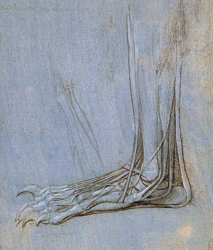 The anatomy of a foot, 1485