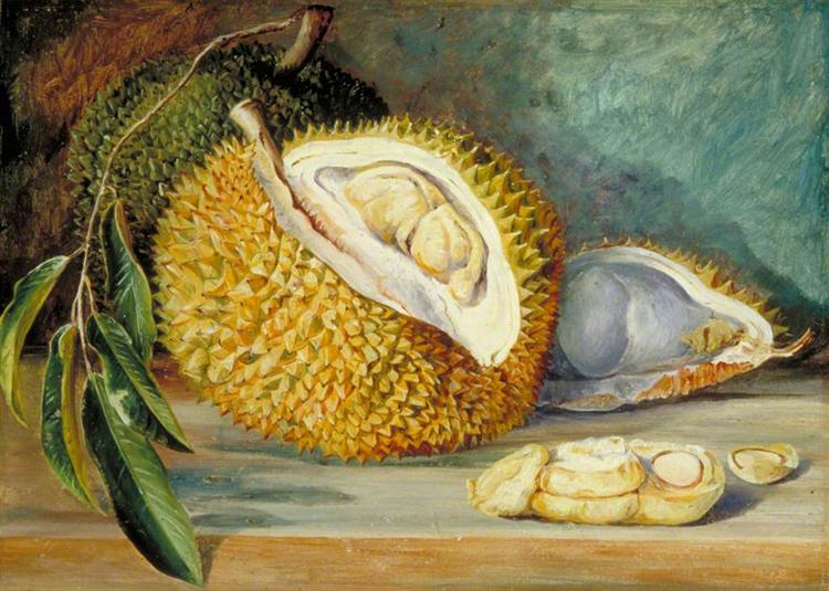 Durian Fruit from a Large Tree, Sarawak, Borneo, 1876 - Marianne North