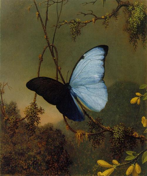 Blue Morpho Butterfly, 1865 - Martin Johnson Heade