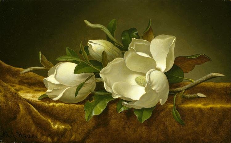 Magnolias on Gold Velvet Cloth, 1890 - Martin Johnson Heade
