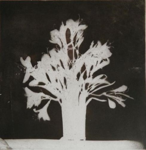 Flowers At A Window, 1975