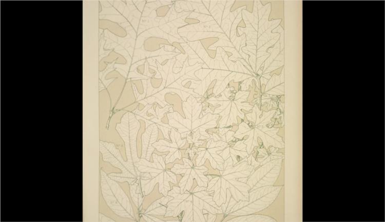 Leaves and Flowers from Nature Ornament no. 4. Leaves of the Oak, Fig Tree, Maple, White Bryony, Laurel, and Bay-tree, full size - Owen Jones