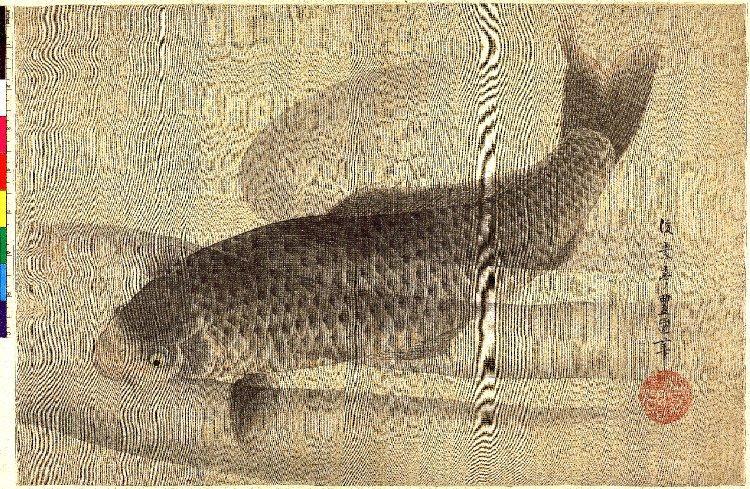 Grey carp in water - Utagawa Toyokuni II.