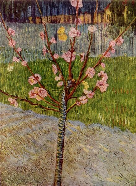 Almond Tree in Blossom, 1888 - Vincent van Gogh